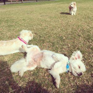 Dog Grooming St Kilda