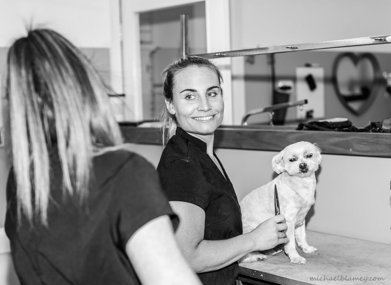 Dog Wash And Grooming Melbourne
